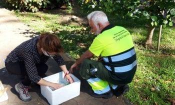 Parques y Jardines aplica a un tratamiento biológico contra insectos en varias plazas y jardines de la ciudad