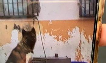 Retirado un perro que permanecía en la vía pública amarrado a una ventana.