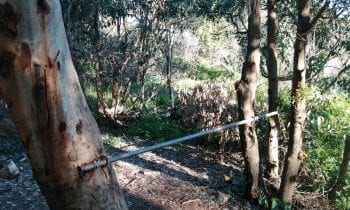 El Ayuntamiento investiga la autoría de los daños causados a dos árboles taladrados para colocar una barra de ejercicios