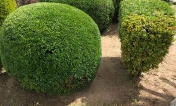 Parques y Jardines acomete mejoras por toda la ciudad atendiendo las incidencias registradas en el Gecor