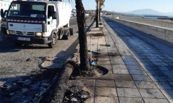 Parques y Jardines cifra en más de 40 las palmeras quemadas en la zona de levante y varios parterres sembrados que han resultado calcinados
