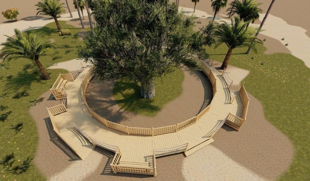 Adjudicado el proyecto para la construcción de una pasarela alrededor del drago centenario