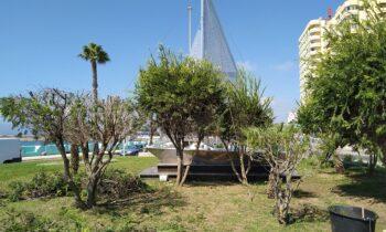 Parques y Jardines acomete la poda de palmeras y la siembra de nuevas plantas